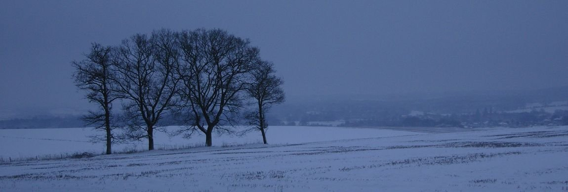 Isolated Trees on Dean Hill in Winter