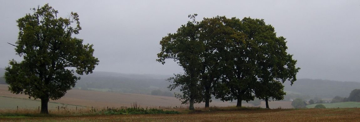 Isolated Trees on Dean Hill in Summer
